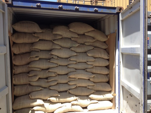 Green Coffee bags stuffed into 20 Ft Container
